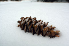 Single Lone Pine Cone In a Pile of Snow.  Royalty Free Stock Photography