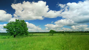 Single lone tree. Lonely tree on a meadow against sky with clouds stock video footage