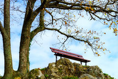 Single loneliness bench over the tree, autumn concept Stock Photos