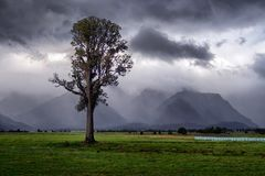 Dramatic landscape of lonely tree in the rain stock photos