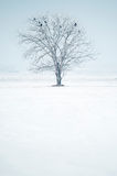 Single lonely tree with birds in snowy field. Single lone tree with birds in snowy field Royalty Free Stock Photos
