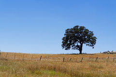 Single lonely tree in a brown grass field Royalty Free Stock Image