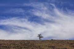 Lonely tree on hilltop in Morocco. Single lonely tree on rocky hilltop in Northern Morocco Stock Photography