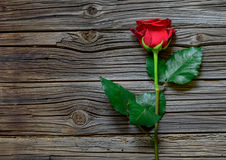 Single lovely red rose against a dark wood Stock Photography