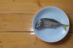 Single mackerel Stock Photos