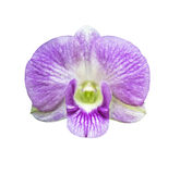Single magenta orchid flower  isolated Stock Photo