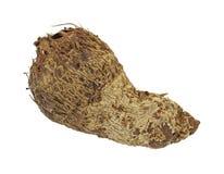 Single malanga root Stock Photo