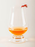 Single malt tasting glass with scorpion, single malt whisky in a Royalty Free Stock Photo