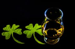 Single malt whisky in a glass of tasting with decoration for St. Patrick`s day, green clover symbol for Irish holiday, festive stock photography