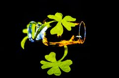 Single malt whisky in a glass of tasting with decoration for St. Patrick`s day, green clover symbol for Irish holiday, festive stock photos