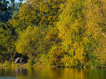 Single man fishing in a lake at autumn fall time Stock Photo