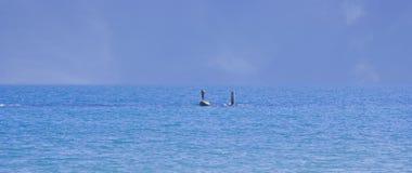 Single man at sea Stock Image