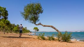Single man taking a morning walk near the sea royalty free stock photos