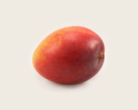 Single Mango. Single ripe unpeeled uncut sweet Haden mango Royalty Free Stock Photography