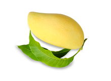 Single mango isolated on white background. Stock Photo