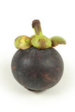 Single mangosteen Royalty Free Stock Photography