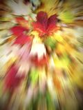 Single maple explosion. Zoom burst effect on fallen autumn leaves spread out showing beautiful vibrant colours of red, orange and yellows Stock Photos