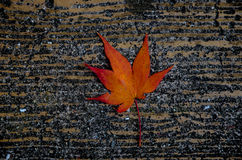 Single maple leaf on concrete floor royalty free stock images