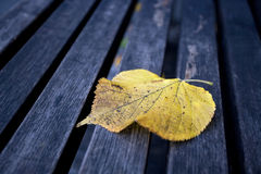 Single maple leaf in wooden bench Royalty Free Stock Photo