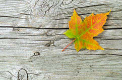 Single maple leaf at wooden surface Royalty Free Stock Photography