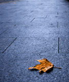 A single maple leave on city's pavement Royalty Free Stock Images