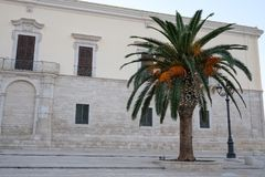 Single mature palm tree on a square near the harbour in Trani, Puglia, Italy royalty free stock image