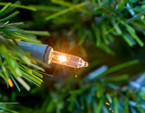 Single minature bulb from xmas tree Stock Photography