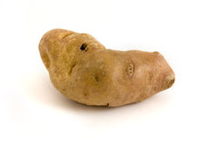 Single misshapen potato over white Stock Image