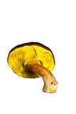 Single mushroom Stock Photos