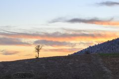 Single naked tree silhouette during sunset on toros mountains Royalty Free Stock Photography