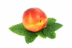 Single Nectarine. With green leaves isolated on white background Stock Photos
