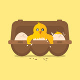 Single New Born Chick Hit The Egg. Royalty Free Stock Images