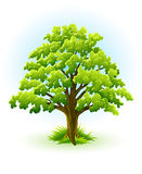 Single oak tree with green leafage Royalty Free Stock Image