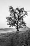 Single Oak Tree and Sunset Royalty Free Stock Images