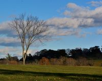 Late fall fall field in New England under a sunny, blue sky. Single oak tree, white cumulus clouds, green and brown leaves and grass royalty free stock images