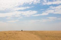 Single oil barrel in the desert Stock Image