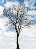 Single old and dead tree Royalty Free Stock Photos