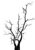 Single old and dead tree. Stock Photo