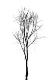 Single old and dead tree isolated Royalty Free Stock Photos