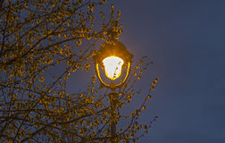 Single old-fashioned lantern in the branches of a tree Royalty Free Stock Photography