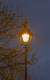 Single old-fashioned lantern in the branches of a tree Royalty Free Stock Image