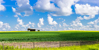 Single old shed in the middle of agricultural field Stock Photos