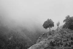 Single olive tree at cliff edge in mountains on foggy day Royalty Free Stock Photography
