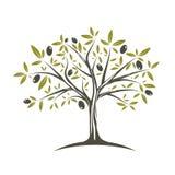Single Olive tree. Illustration of the Single Olive tree in fllat colours royalty free illustration