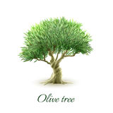 Single olive tree picture print Royalty Free Stock Photos