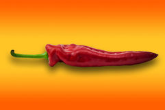 Single one red paprika sweet pepper on orange background Royalty Free Stock Image