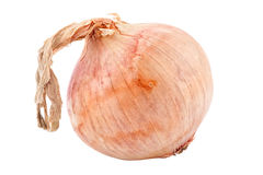 Single onion Stock Photo