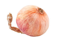 Single onion Royalty Free Stock Photography