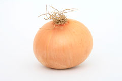 Single onion. Single healthy onion isolated on white, macro, close up, with copy space Stock Images