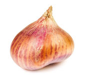 Single onion Stock Photos